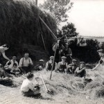 Loading the hay wagon at Traine Farm in 1942.  The horse 'Lion' belongs to Fred Rowland, the owner of Traine Farm, who is directing the work.  The hay would later be hand pitched to form a rick for feeding the cattle through the winter. The group includes Ken Wood, Bob Penwill, Ralph Avent, Doris Congdon, Sam and Bill Gibson, John Moses, Charlie Brook and Bert Wood.